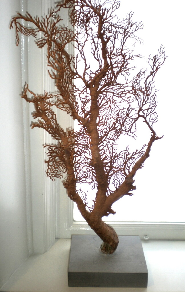 See Tree - Zoological Museum, Lund